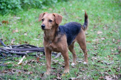 Rencontres animaux chiens