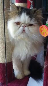 chat pour rencontre amicale Bobigny