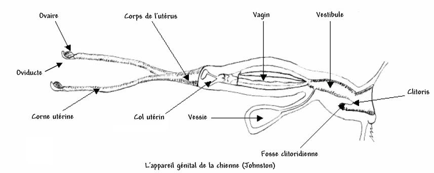 La dorsalgie à la grossesse cest normal